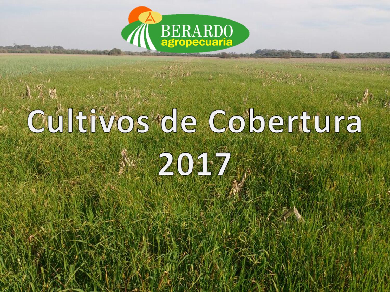 Cultivos De Cobertura – Nuestro Nuevo Desafío